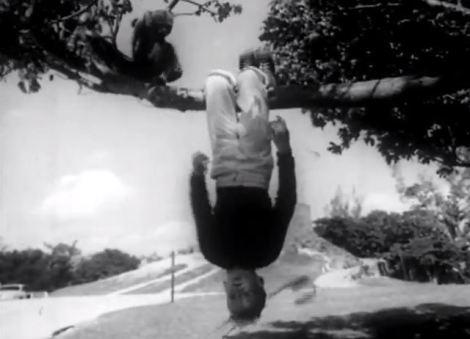 Cuello - Mosquetero débil cisne